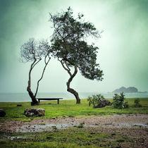 Waihike Island von Stas Kulesh