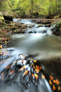 May Beck, Sneaton Forest.  North Yorkshire von Martin Williams