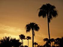 Palmensilhouette im Abendrot by Christine  Hofmann
