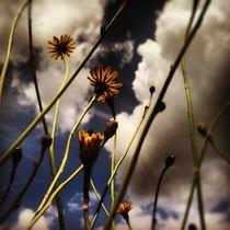 birdland 09 by Oliver Metz