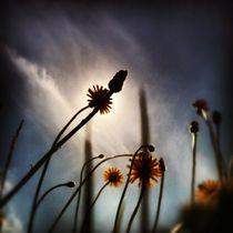birdland 20 by Oliver Metz
