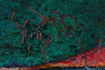 Caminos truncos by Ricardo Anderson