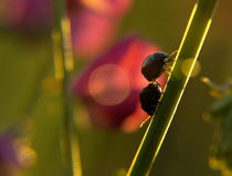 2 bugs von Iva Lednicki
