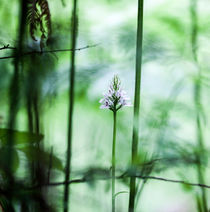 Flower Among the Ferns by David Hunter