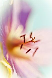 Lilac Blues von David Hunter