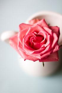 The Rose  von Nicola  Pearson