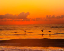 Four Pelican Sunrise by Roger Wedegis