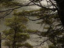 Silvery Rain / Silberner Regen von starsongstudio