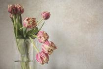 tulips by Zuzana  Smolkova