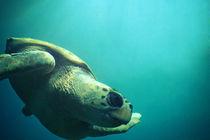 Turtle von Marta Camacho