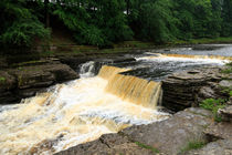Aysgarth Lower Falls von Louise Heusinkveld