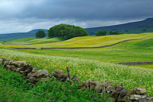 Wensleydale-meadows0101
