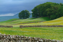 Dry Stone Walls and Wildflower Meadows von Louise Heusinkveld