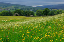 Wildflower Meadow by Louise Heusinkveld