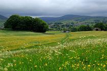 Wildflower meadow near Hawes, Wensleydale by Louise Heusinkveld