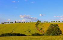 Sommerfelder von Wolfgang Dufner