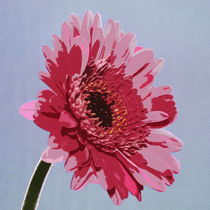 Gerbera Flower by David Pringle