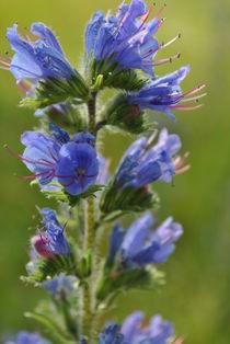 Blüte im Detail von mandy-winter