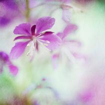 colorful (exklusiv bei Artflakes) von Priska  Wettstein
