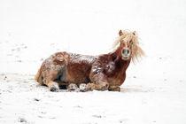 A horse playing in a snowy landscape von chrisroll