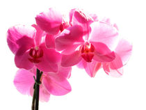 Orchid by sharon lisa clarke