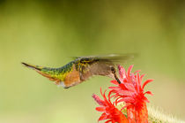 Hummer Delight by Barbara Magnuson & Larry Kimball