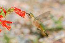 Hummers von Barbara Magnuson & Larry Kimball