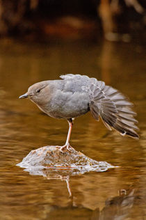 Dipper Stretch by Barbara Magnuson & Larry Kimball