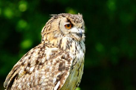 Owl7645