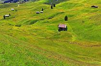 Blumenwiesen in den Dolomiten von Wolfgang Dufner