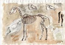Studie Pferdeskelett von Dorothee Rund