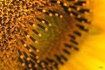 Sunflower von Szantai Istvan