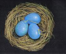 Bird Nest With Eggs: Color Pencil on Black von Joyce Geleynse