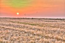 Sonnenutergang im Sommerfeld von Wolfgang Dufner