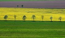 Streifenlandschaft von Wolfgang Dufner