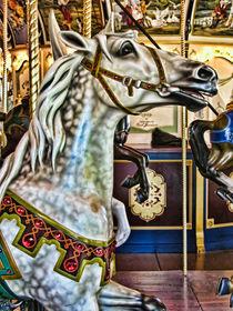 Carousel-dapple-head-img-4505-edit