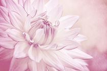 La Dahlia by AD DESIGN Photo + PhotoArt