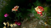 im Rosengarten von Christine  Hofmann