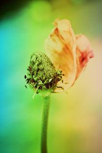 Bokeh Floral von rosanna zavanaiu