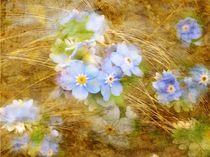 Blütenzart* by claudiag