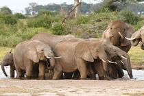 Elephants on the waterhole by martin buschmann