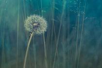 blue tinted by Priska  Wettstein