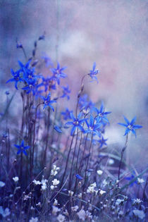 bluebell heaven by Priska  Wettstein