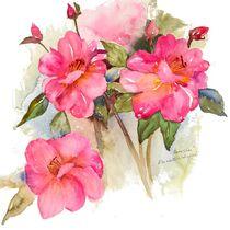 Camellias by Elisabeth Wakeford