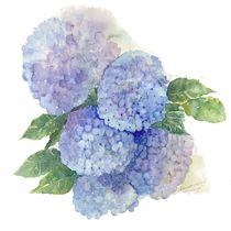 Hydrangea by Elisabeth Wakeford