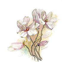 Magnolia by Elisabeth Wakeford