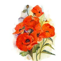 Poppies by Elisabeth Wakeford