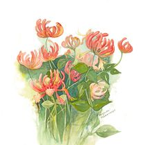 Honeysuckle by Elisabeth Wakeford