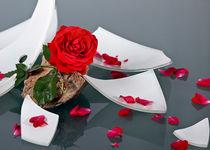 Rose im Scherbenhaufen von Wolfgang Wittpahl