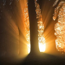 Good Morning Sunshine von Martin Crush